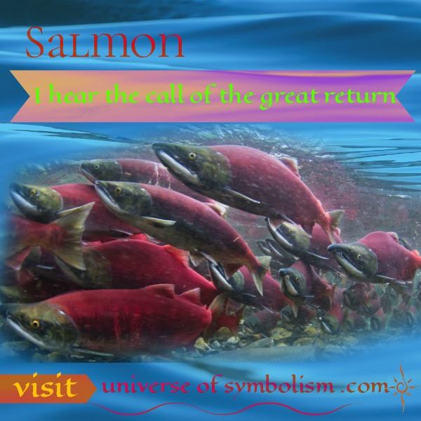 Salmon Spirit Animal is a beautiful symbol of being called to the great return of Spirit