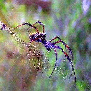 spider totem animal