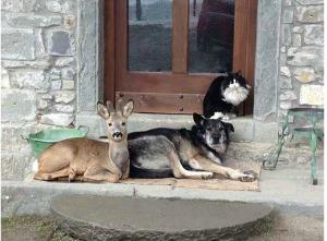 spirit animals living in peace