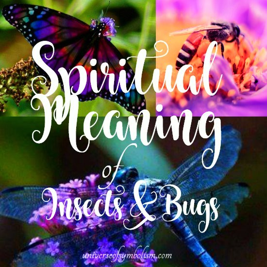 Insect Symbolism & Bug Symbolism | The Spiritual Meaning of Insects & Bugs