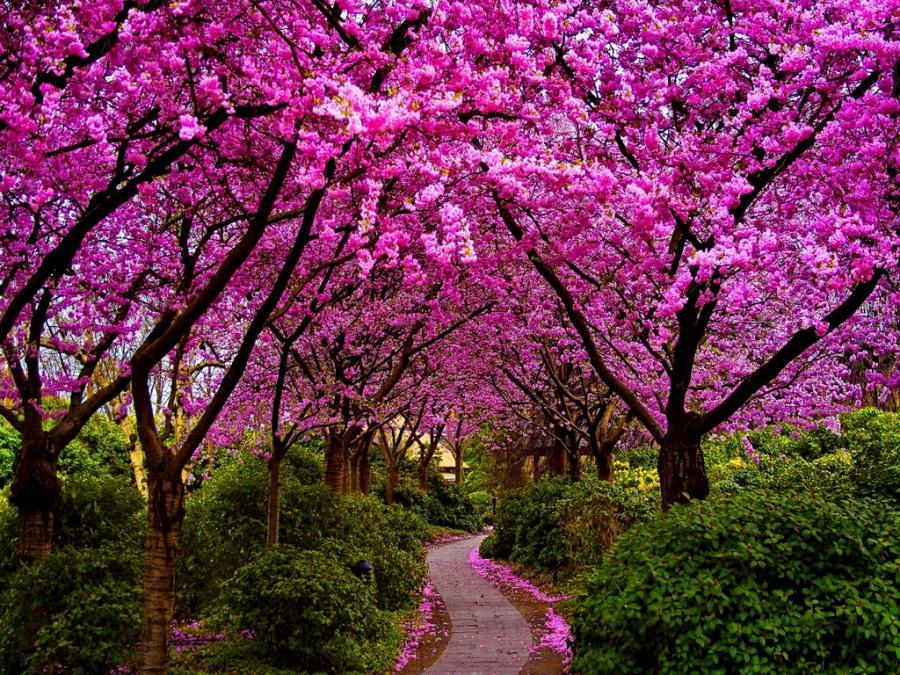 spring tree, symbols of spring