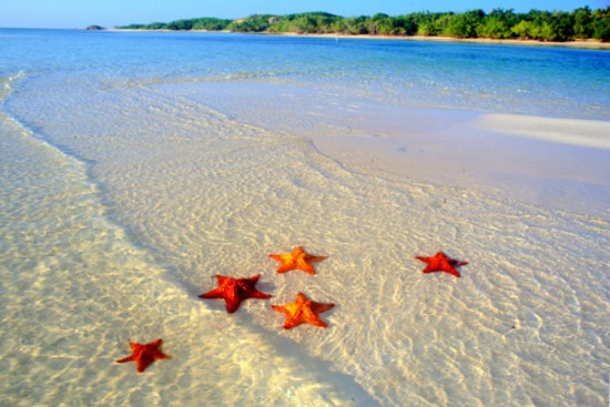 Starfish meaning
