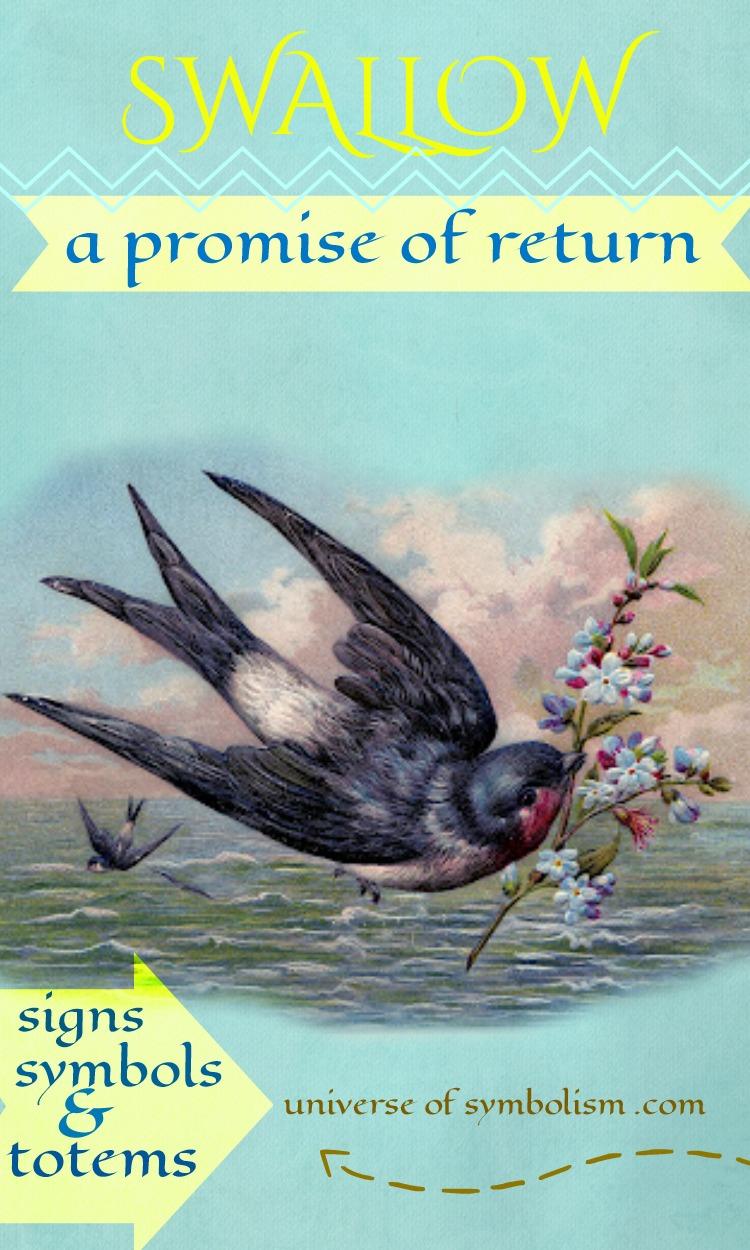 Swallow Symbolism Spirit Power Totem Animal Messenger Swallow