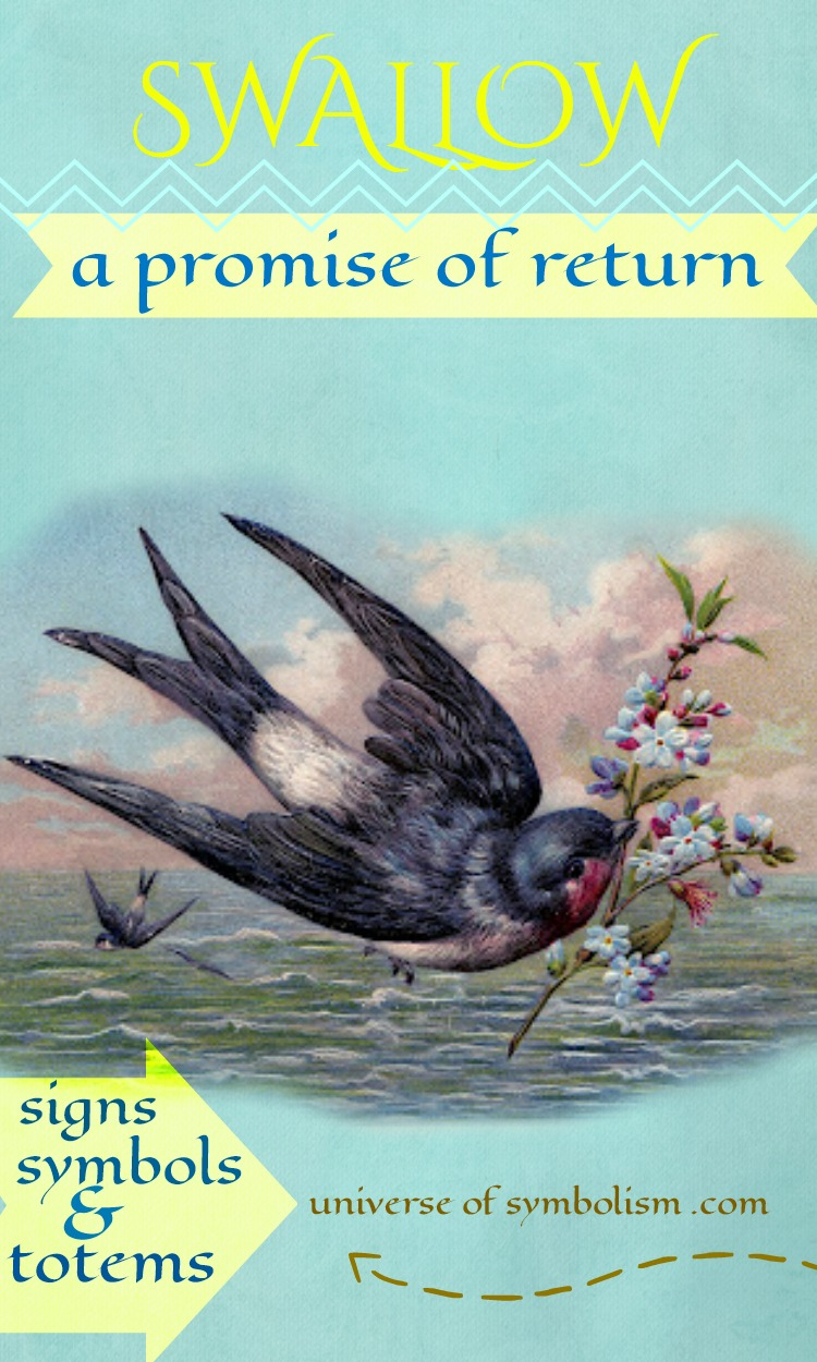 Swallow Spirit Animal, an enduring symbol of a promise to return