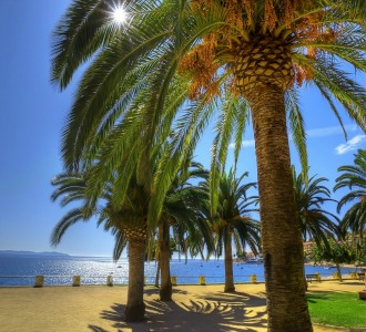 tree symbolism for palm tress brings the awareness of the need to regenerate the spirit...