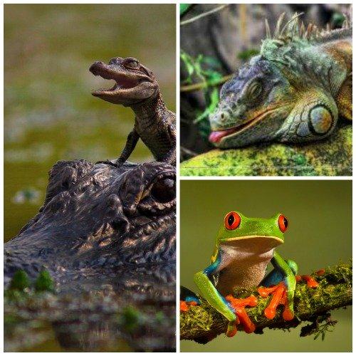 reptile spirit animals