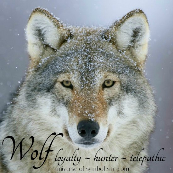 Wolf Symbolism & Meaning - Wolf Spirit, Totem and Power Animal Medicine & Attributes