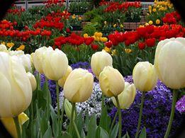 flower symbolism